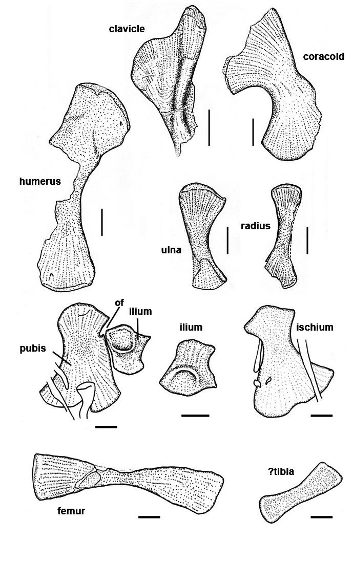 Endennasaurus Photos